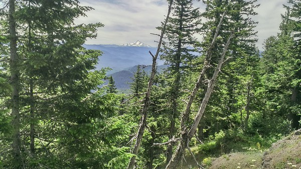 Mt Jefferson in the distance from Fish Creek Mountain trail