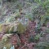 Cut log on old Memaloose Trail