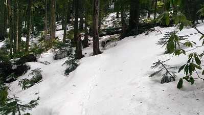 Where we turned around on the South Fork Mtn trail.  The snow was just too deep.