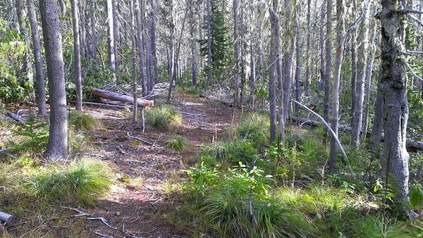 Rho Creek Trail above road 4672