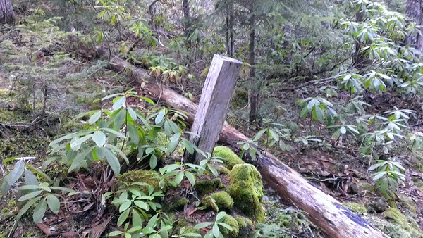 Found this post on Rho Creek Trail - doesn't appear to be a trail junction - what is it?
