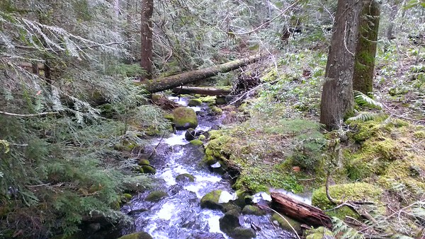 Tumble/Rho Creek