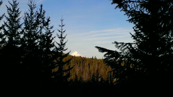 Tip of Mt Hood from Rho Creek Trail