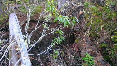 "Strange ""pit"" on Rho Creek Trail - was there a spring here or ????"