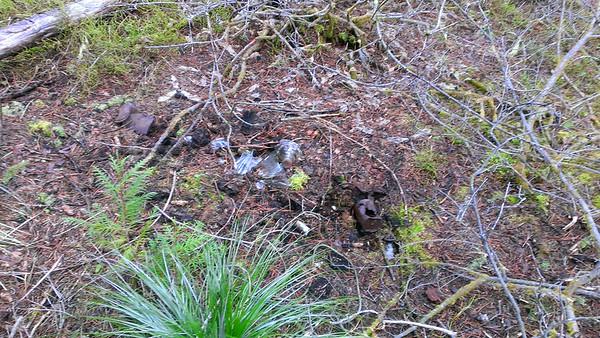Burn pile near Rho Ridge Guard Station