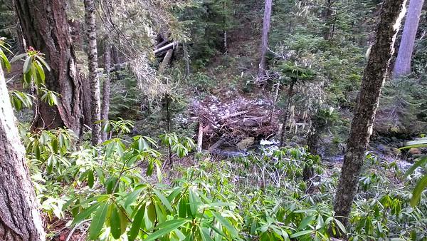 Rho Creek