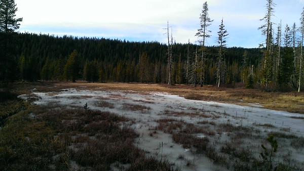 Rho Meadow
