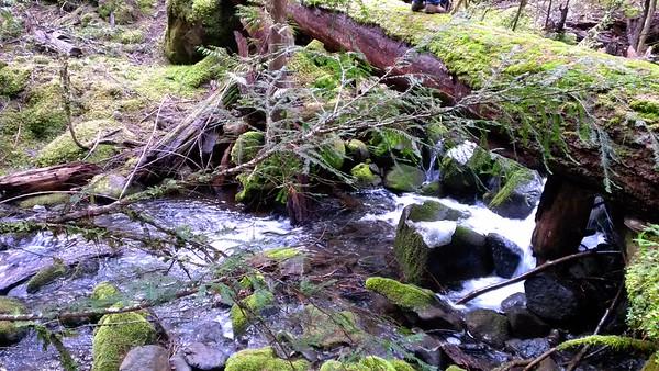 Tumble Creek Crossing on Rho Creek Trail