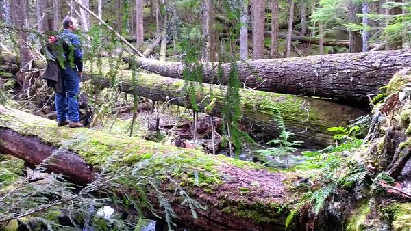 Logs across Tumble Creek on Rho Creek Trail