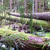 Logs across Tumble Creek on Rho Creek Trail
