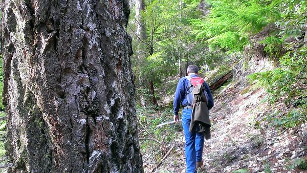 Old Blaze and Rho Creek Trail