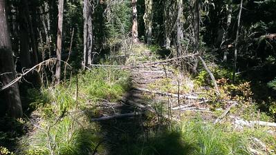 Old Skyline Trail near Olalie Meadow