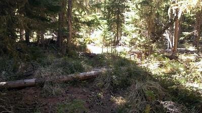 Old Skyline trail near Olallie Meadow