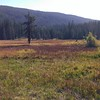 Olallie Meadow