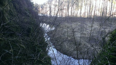 The little slough/channel behind the island in the river