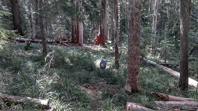 Tread on Three Lynx Way Trail