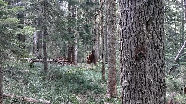 Blaze and tread on Three Lynx Way trail