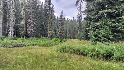 One of the meadows at Cache Meadow