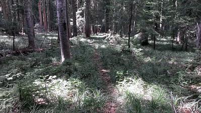 Three Lynx Way trail