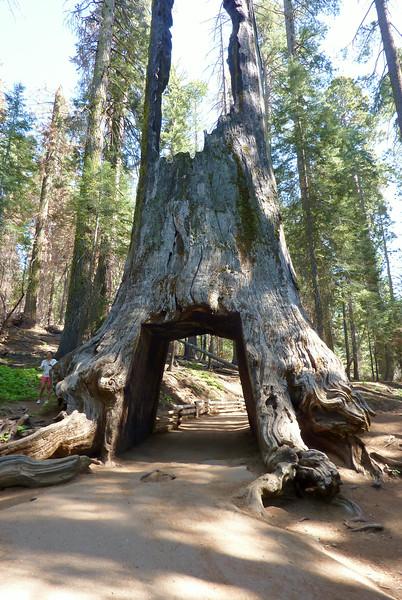 Yosemite Hikes are located here: