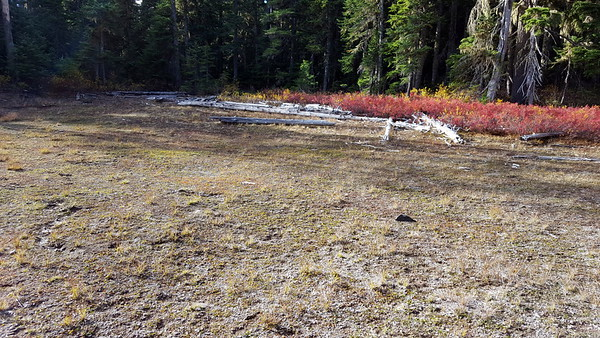 The first meadow on Cottonwood meadows trail - the meadow was completely dry