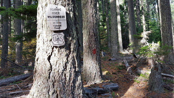 Roaring River Wilderness sign near old painted blaze - the painted blazes didn't last long above 4635-120 - maybe a tenth of a mile
