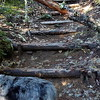 More new steps on Dickey Creek trail