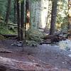 Camp at Dickey Creek
