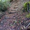 New Steps on Dickey Creek Trail