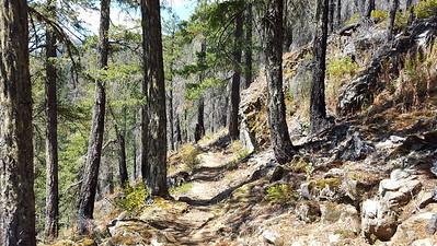 Entering the burned area on Elk Lake Creek trail