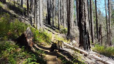 Burned areas on Elk Lake Creek trail