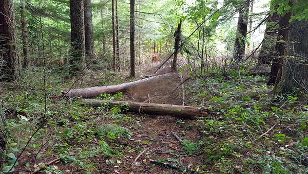 Fanton Trail - 505