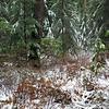 Snow on Fanton trail