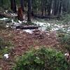 Campsite 7 around Eunice Lake