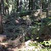 A REALLY bad blowdown on the Skookum Lake trail - near the lake
