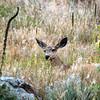 Coyote Ridge Natural Area