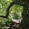 AT tree arch