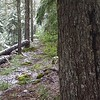 The first blaze we saw after exiting the Buck L:ake Trail - you can see the tread next to the tree