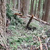A Big mess on the trail - before