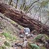 Big blowdown at second rockslide on Cripple Creek Trail