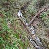 Un-named side stream right off Cripple Creek Trail