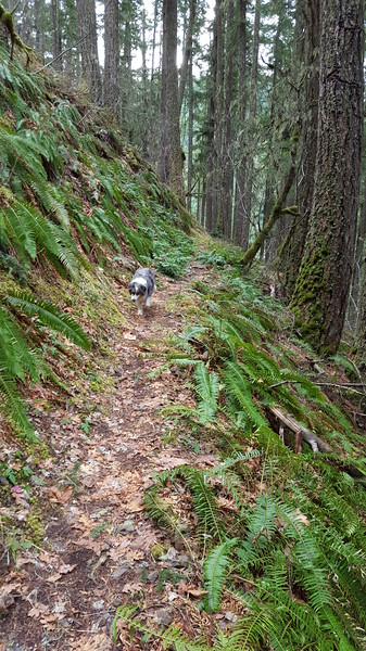"""Trail past """"The Grotto"""" on Cripple Creek Trail"""