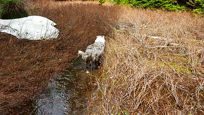 """It was pretty wet at Cache Meadow - the water ws between 4 and 12"""" deep in the trail"""
