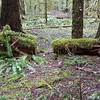 Cut log above Eagle Creek Trail - old camp?