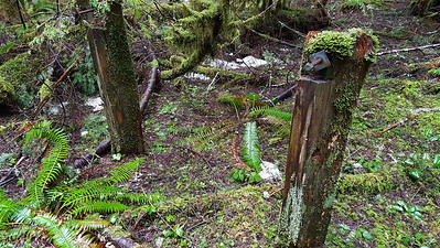 One of several sets of posts - hitching posts in old camp above Eagle Creek trail?