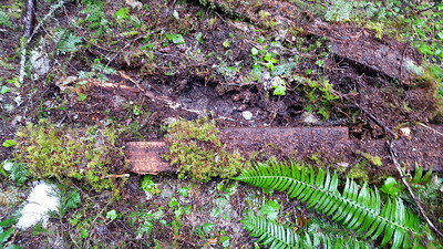 Old notched timber above Eagle Creek trail - old picnic table?