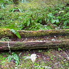 Water trough found above Eagle Creek trail - old camp?
