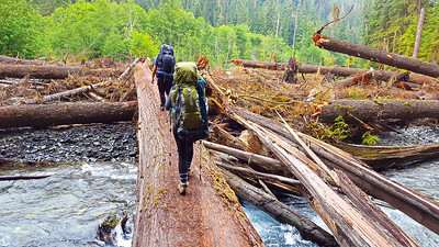 Crossing the Quinalt river on a huge log - at the quarter mile washout of the trail