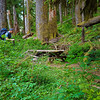 Very old picnic table alongside trail near the start - East Fork Quinault river trail