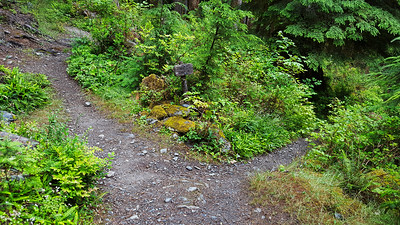 Junction down to O'Neil Creek camground - Night 1 - East Fork Quinault River  trail